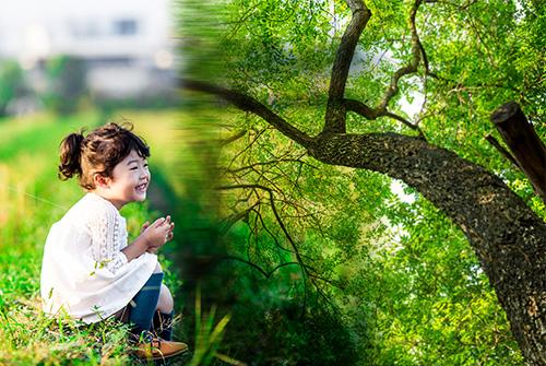 epanouissement sante belle journee forme bonheur nuage beau ciel herbe douce pure enfance nature arbre croissance racines promotion de l'éducation AFEPS